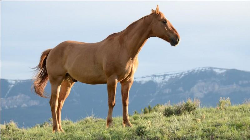 À quel âge un cheval a finit sa croissance?
