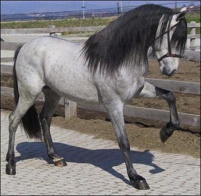Ce cheval a une robe :