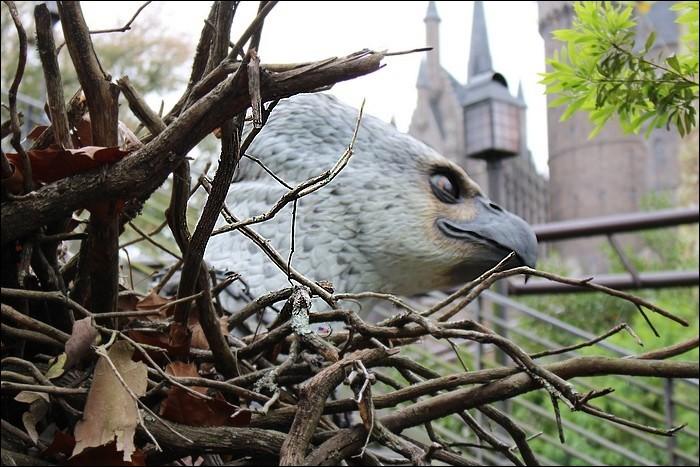 Quel est le nom de l'hippogriffe d'Harry ?