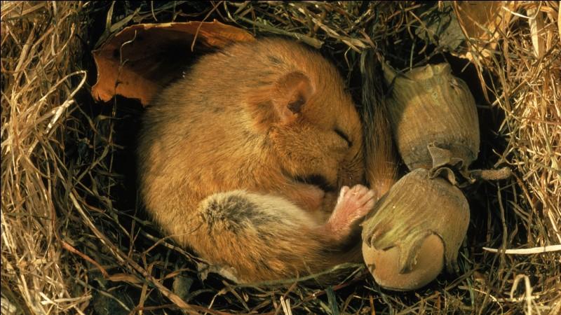 Première question afin de mieux nous comprendre : qu'est-ce que l'hibernation, (qui dure plusieurs semaines ou plusieurs mois) ?