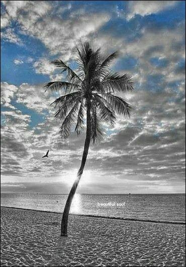 """Dans le film de Lelouch, """"L'Aventure, c'est l'Aventure"""", on se souvient de cette scène de plage avec Ventura, Brel, Aldo Maccione, Charles Dunner et Charles Gérard. Où est tournée cette scène ?"""