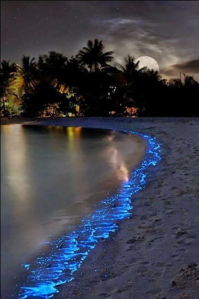 Où se trouve cette plage insolite qui scintille la nuit et dont vous serez subjugué par ce paysage féérique de l'île de Vaadhoo ?