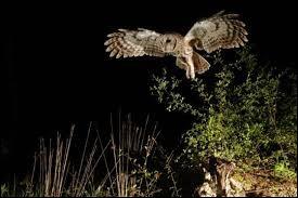 Comment appelle-t-on les animaux voyant la nuit ?