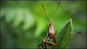 Tous les insectes ont 6 pattes.