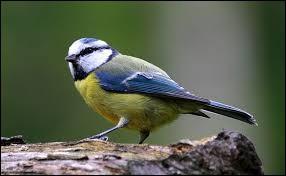 Comment appelle-t-on l'acte reproducteur chez les oiseaux ?