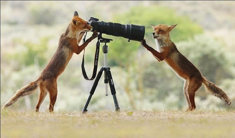 ''Say Cheese'' est le titre original de cette photo de la catégorie ''wildlife photos'' du très prolifique photographe australien Julian Rad : il est doué pour capturer des moments simples mais beaux comme ici quand ces deux apprentis-photographes donnent l'impression, l'un de préparer sa photo et l'autre, de poser. Bien sûr une coïncidence, mais amusante.De quelle espèce sont nos deux compères ?