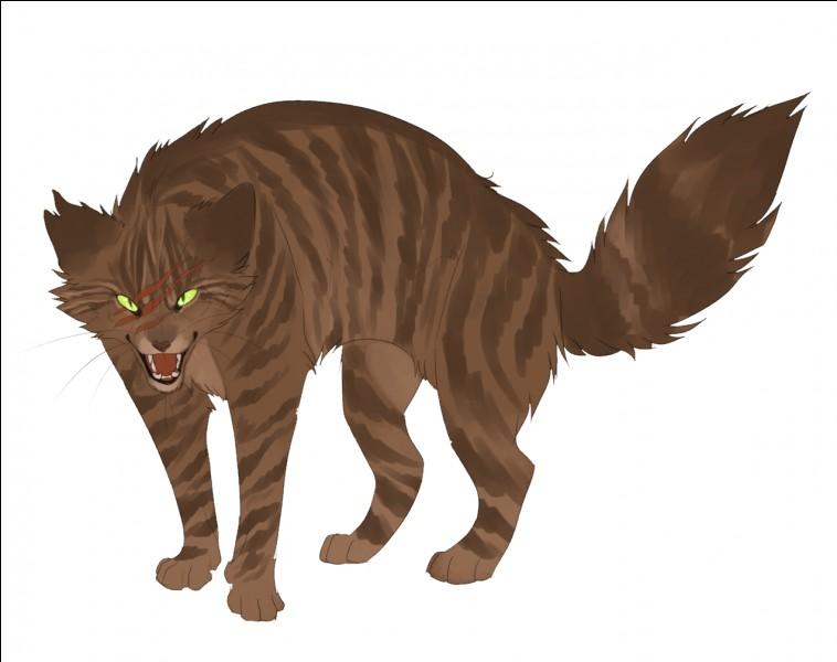 Qui tue Museau Balafré lorsque les chats errants envahissent le camp du Clan du Tonnerre ?