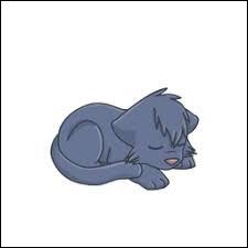 Comment s'appelait Étoile Bleue lorsqu'elle était chaton ?
