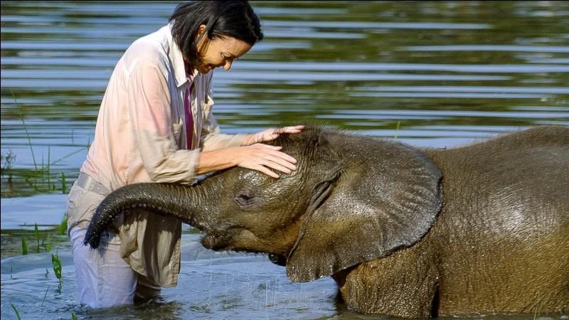 Est-ce que l'éléphant est une espèce protégée ?