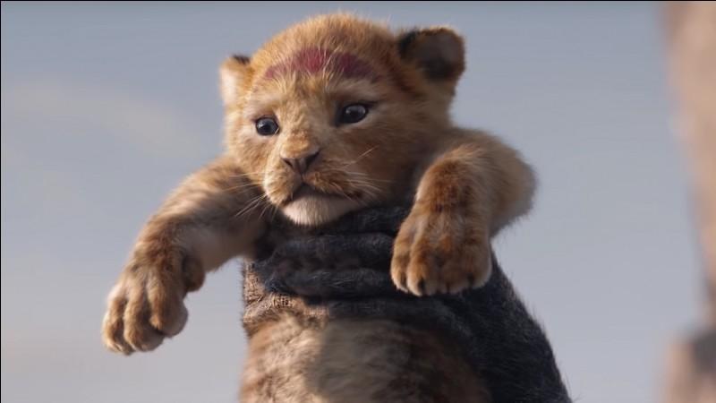 Quel est le temps de gestation de la lionne ?