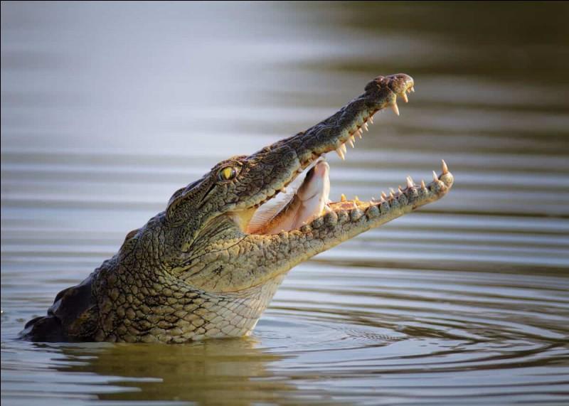 Les crocodiles sont ...