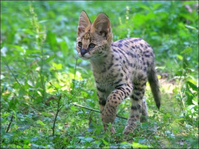 Quelques animaux mignons : les bébés félins