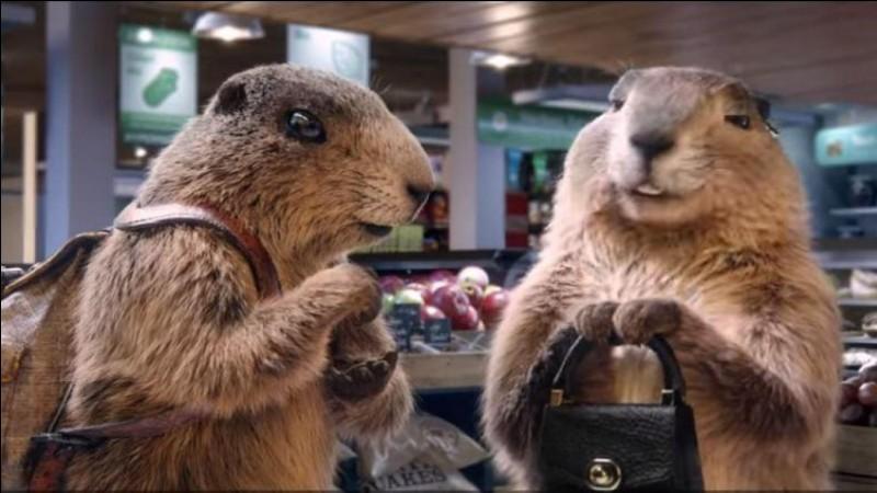 """Pour le chocolat Milka, """"Et la marmotte, elle met le chocolat dans le papier ..."""""""