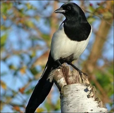Quel est le nom cet oiseau ?
