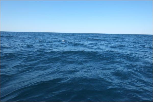Depuis le début de la révolution industrielle, de combien l'acidité de la surface des eaux des océans a-t-elle augmenté ?