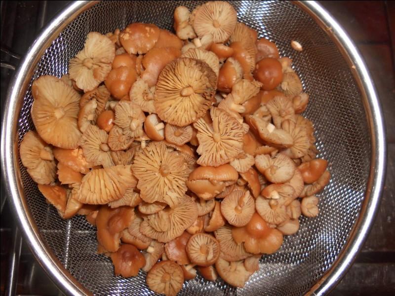 Qu'allons-nous déguster dès que ces champignons seront cuisinés ?