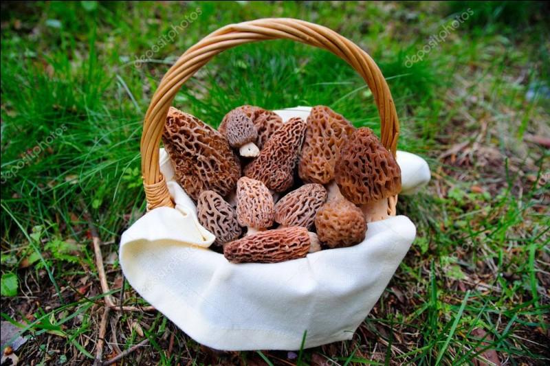 Avant de terminer, je vous ai apporté ce joli panier de champignons de printemps. Profitez-en ils sont fraîchement cueillis ! Je vous les conseille crus, pour améliorer une salade !