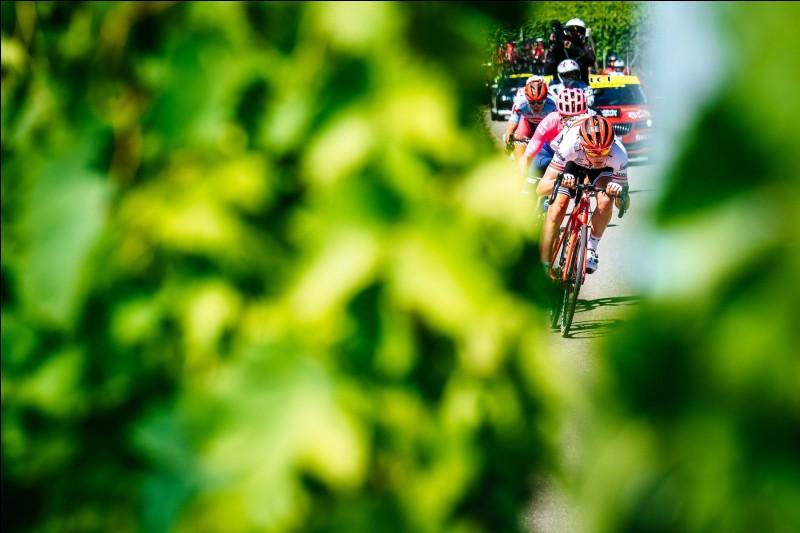 Passons d'Épernay à Colmar. Le tracé de cette cinquième étape est très beau sur le papier. Seulement, ce sont les coureurs qui font la course et le scénario est décevant. Les meilleurs grimpeurs parmi les hommes rapides se jouent la gagne au sprint. Qui passe la ligne en tête à Colmar ?