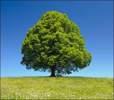 La lithothérapie est l'étude des arbres.