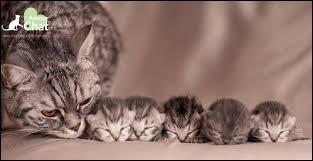 À la naissance, les chatons sont sourds et aveugles !