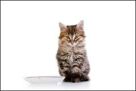 Après combien de temps le chaton est-il sevré ?
