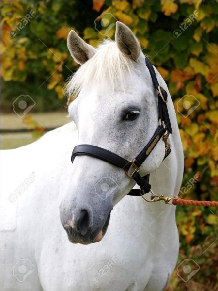 Il n'est pas exact de dire qu'un cheval est blanc :