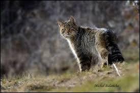 """Complétez cette expression : """"Quand le chat n'est pas là, les souris..."""