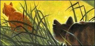 """Dans le tome """"Une Sombre Prophétie"""", l'assassin d'Étoile du Tigre est :"""