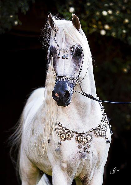 Une race=un cheval !