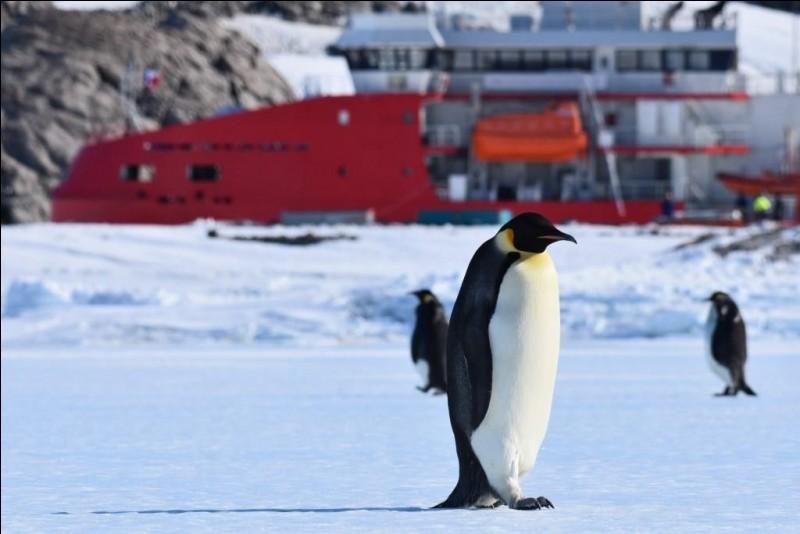 Lequel de ces noms désigne une espèce de pingouins ?