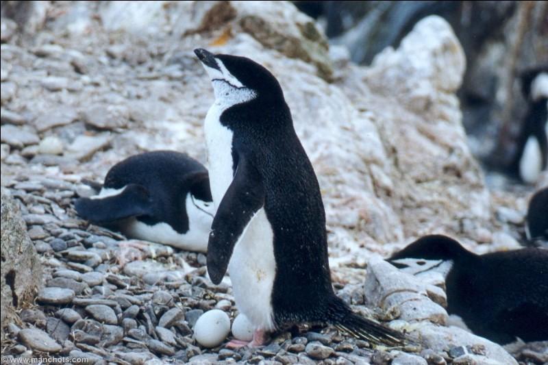 Quel mot est employé pour quand les oiseaux s'assoient sur leurs œufs ?