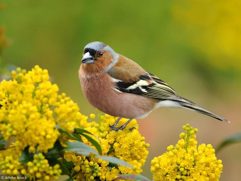 Les oiseaux (11)