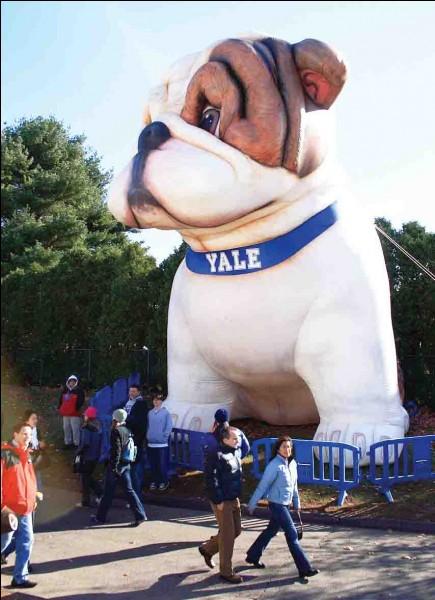 Handsome Dan, la mascotte de l'université de Yale, est un ...