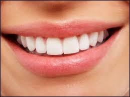 Combien de molaires possède un humain adulte ?