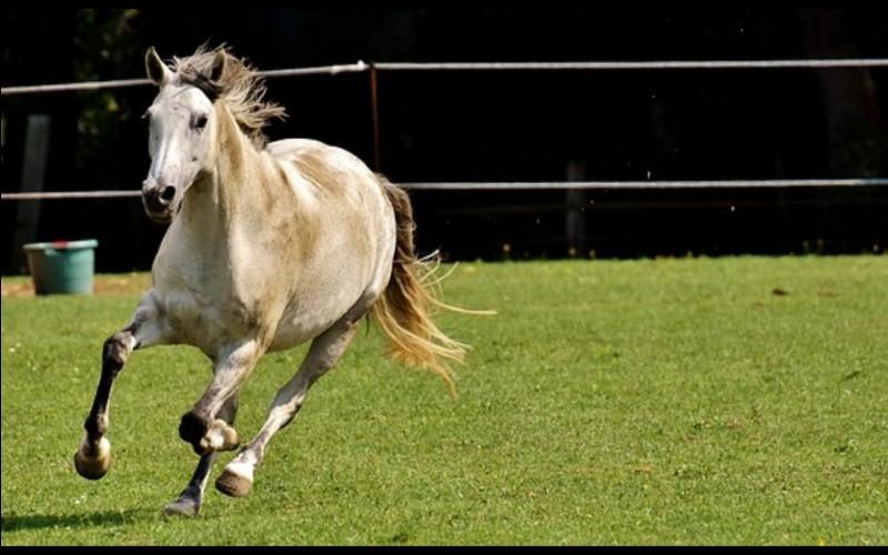 Le cheval, cet animal qui nous fait rêver