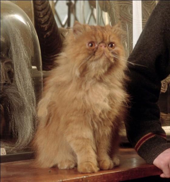 Comment s'appelle le chat roux d'Hermione ? (photo)