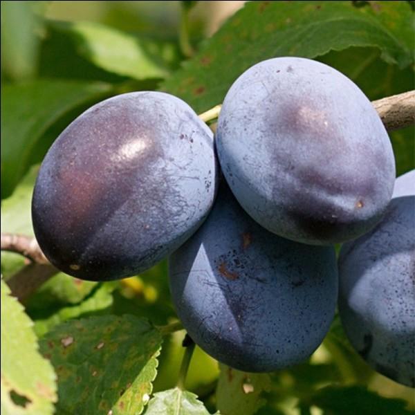 Parmi ces mots, lequel désigne une célèbre variété de prunes ?