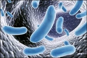 Comment se nomme la bactérie responsable du tétanos ?