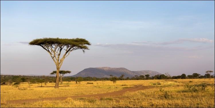 Bonjour Juliette ! Je reviens d'un safari-photo dans le parc national du Serengeti. Les animaux sont rois au/en...
