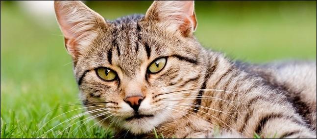 Un chat est plus rapide qu'un lapin au sprint.
