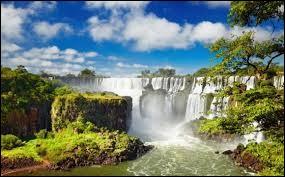 """Complétez le surnom du Brésil avec un nom d'arbre : """" Le pays des..."""