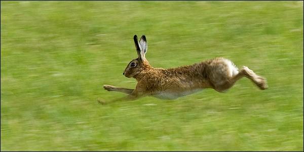 Vous pouvez l'apercevoir en parcourant les plaines, mais un autre animal porte le même nom !