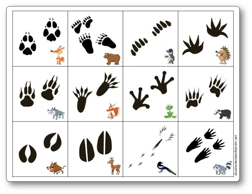 Les empreintes d'animaux