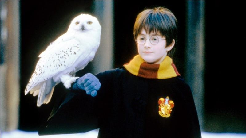 Qui fait la voix française d'Harry Potter ?