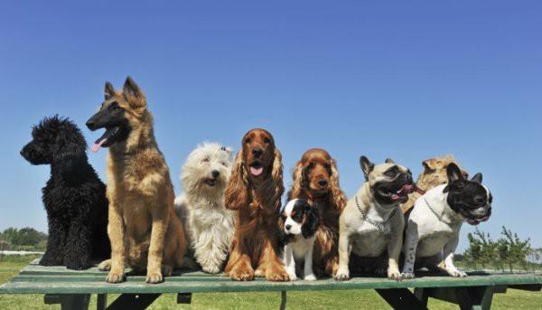 Les races de chiens II