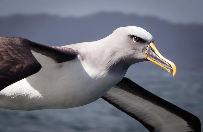 Lequel de ces joueurs de l'OM est surnommé l'Albatros ?