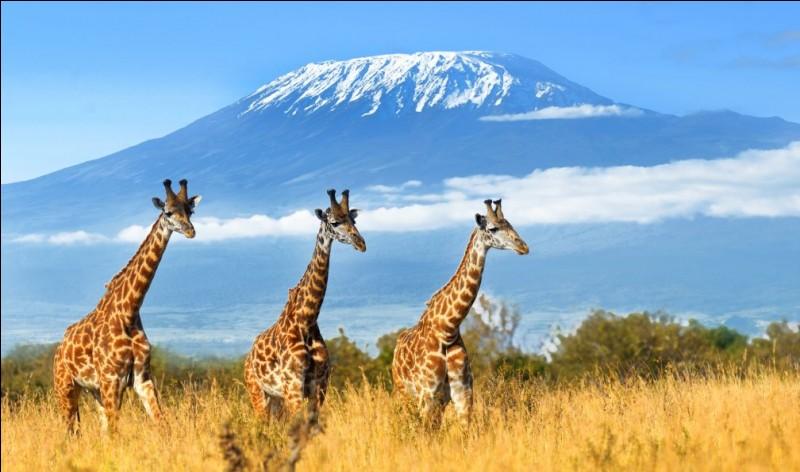 Pays : Tanzanie Hauteur : 5 892 mMassif : Vallée du Grand RiftPremière ascension : 1889. Hans Meyer, Ludwig Purtscheller, Yohanas Kinyala LauwoQuel est ce sommet ?