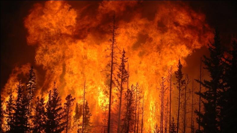 """""""Burn after reading"""" est un long-métrage interprété par Georges Clooney."""