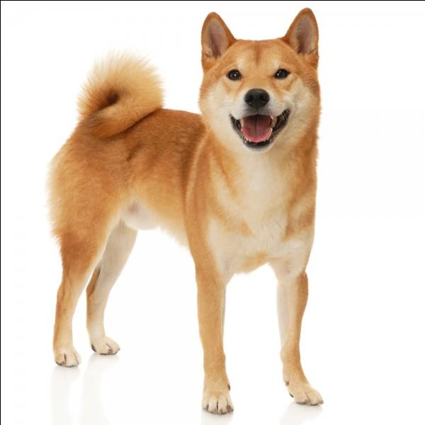 Comment s'appelle son chien ?