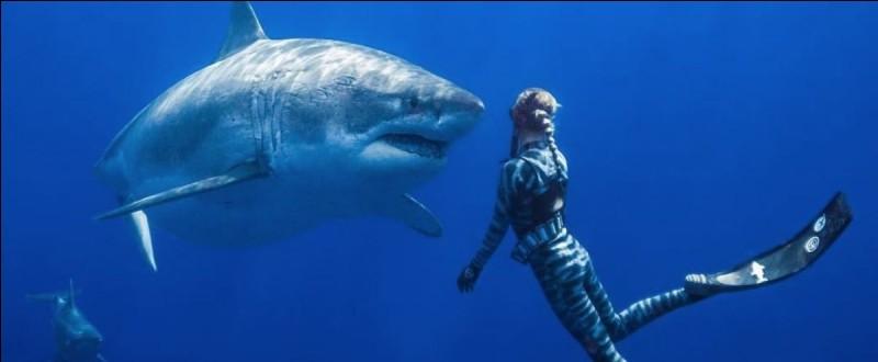 Sacrément courageuse cette plongeuse en face de ce requin blanc. Où se passe cette scène extraordinaire ?